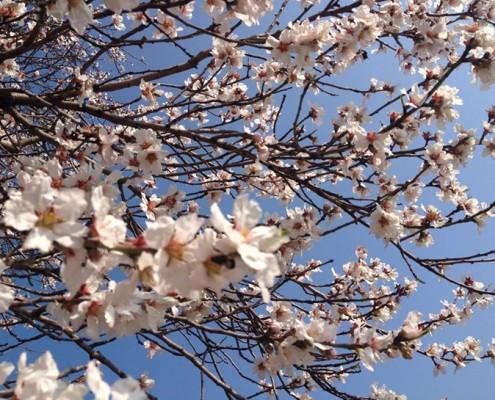 printempsVignesUne
